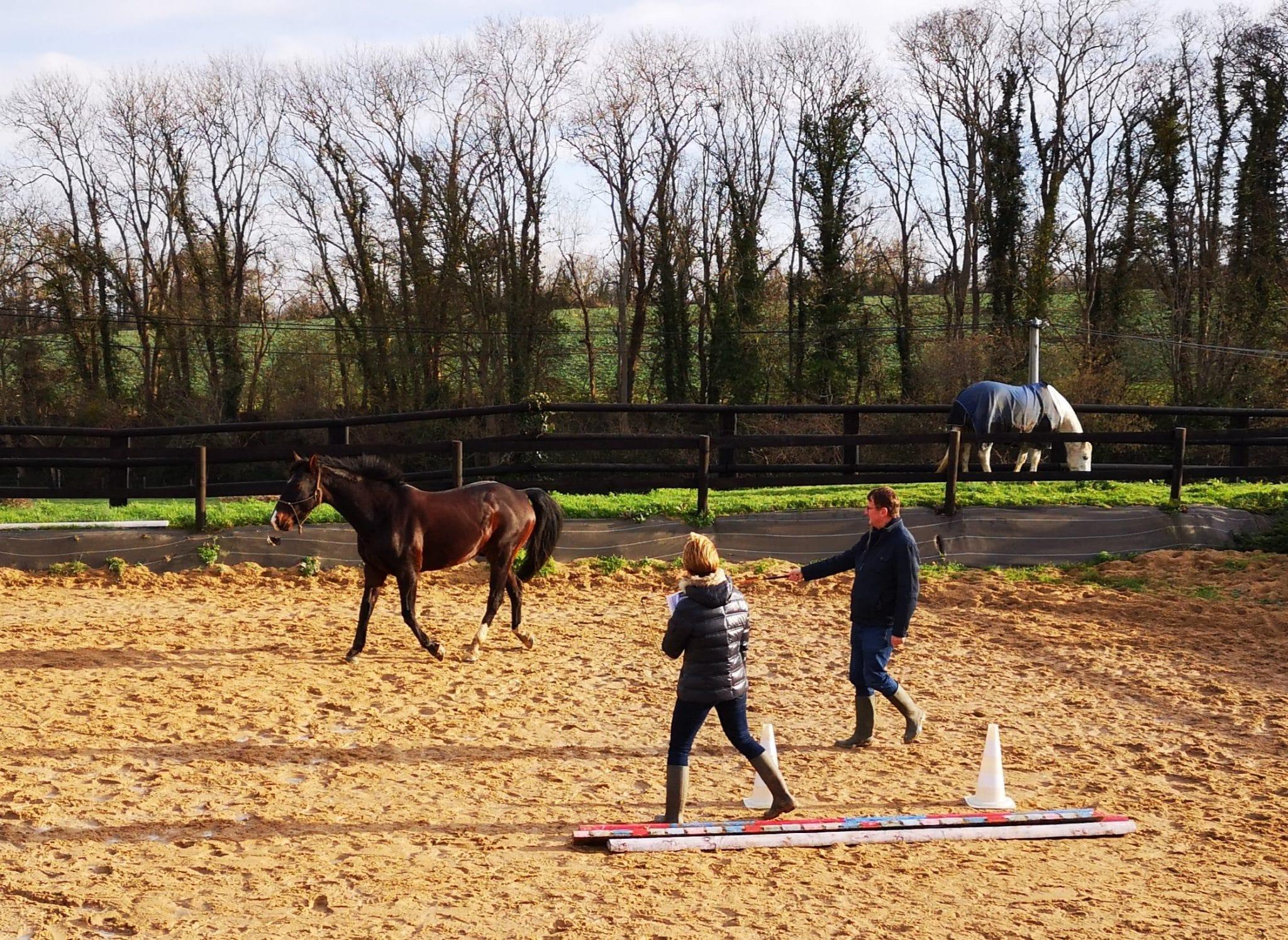 En effet, les chevaux obéissent à une hiérarchie entre eux. Mais contrairement à ce que l'on pourrait penser, celle-ci ne fonctionne pas sur la reconnaissance d'un chef unique.
