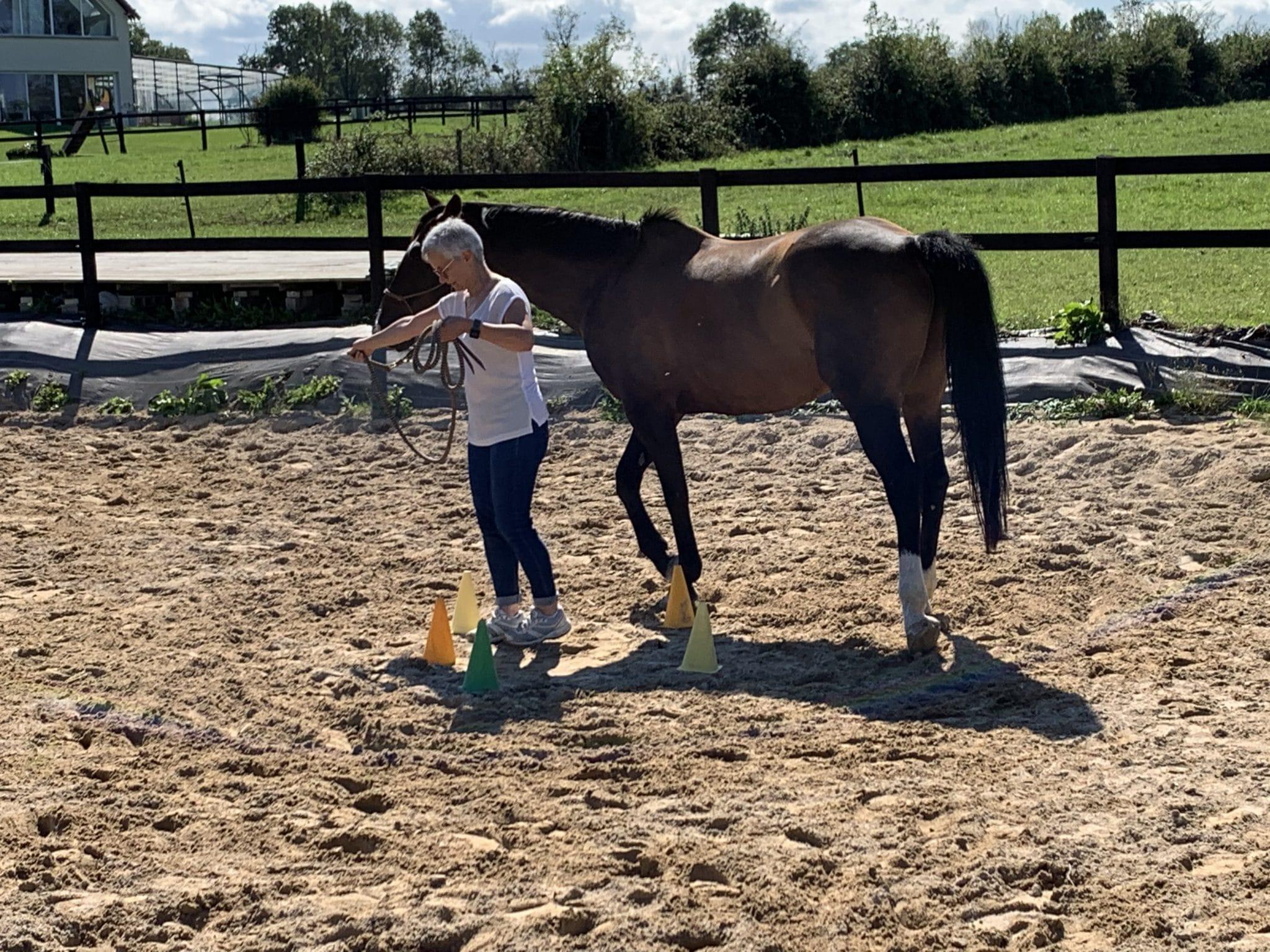 Le cheval recherche l'être capable de lui assurer sa survie en cas de danger. Ainsi, il ne peut pas faire confiance à un guide qui ne serait pas fiable en tant que leader.