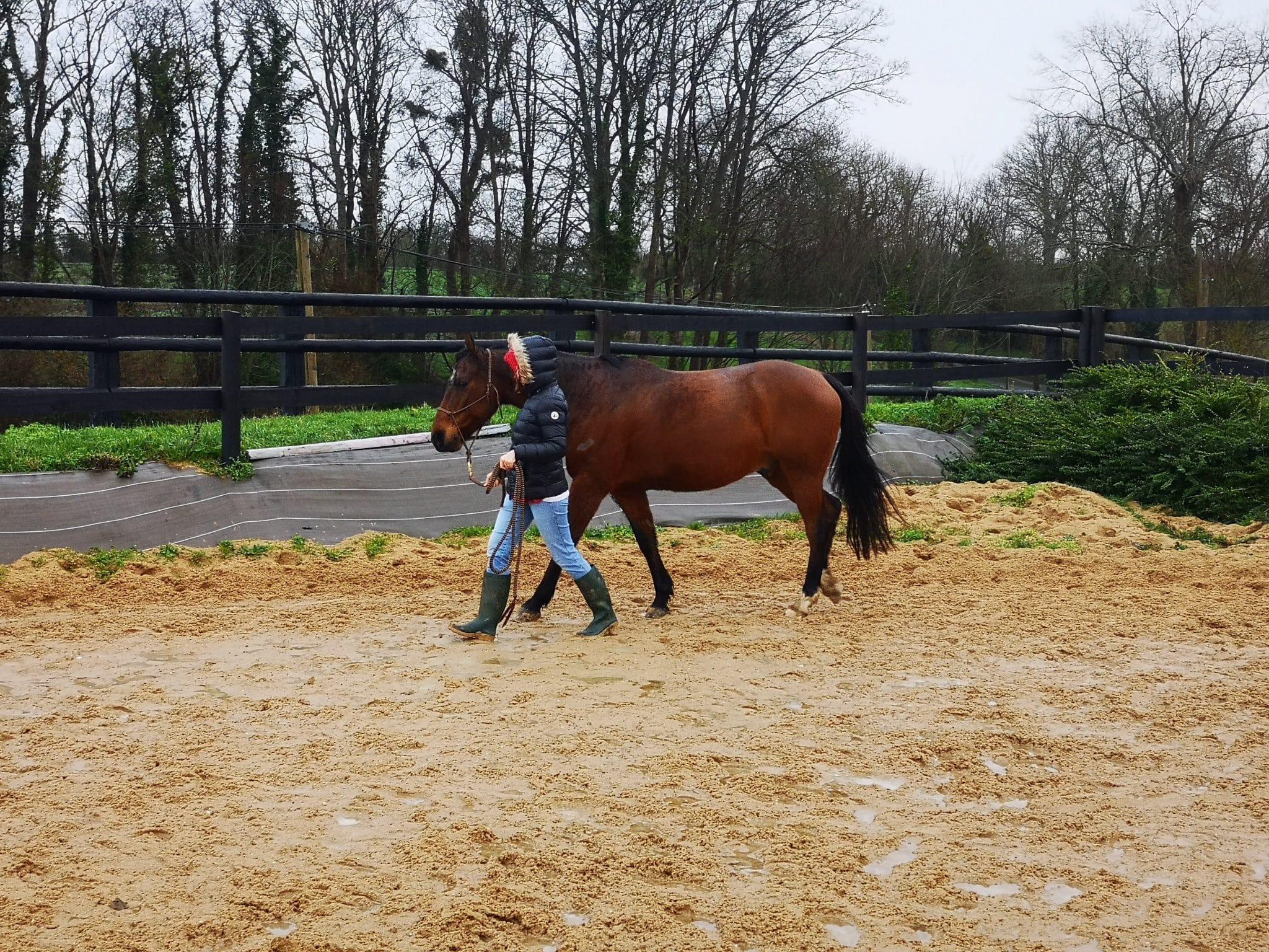 Par ailleurs, le cheval est uniquement sensible aux signaux qu'il détecte chez l'étudiant donc pas de tricherie possible. Ainsi, l'équicoaching apporte une réelle valeur ajoutée à la qualité du coaching d'orientation.